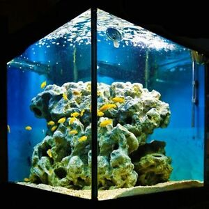 I'm looking for an aquarium 80 gallons plus