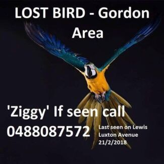Wanted: Lost Macaw Gordon