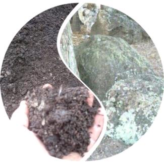 $1200 mossy bush rock /mushroom soil