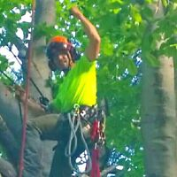 TREE REMOVALS. TREE  LOT CLEARINGS. ARBORIST REPORTS.