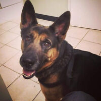 SHEENA NEEDS A FOSTER OR FOREVER HOME