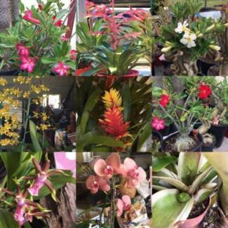 PLANT NURSERY: MASSIVE CLOSING DOWN SALE, EVERYTHING MUST GO.