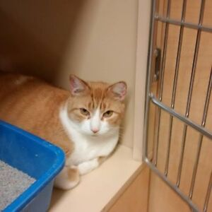 Mila is Up For Adoption at Pet SMART.  Pet Save