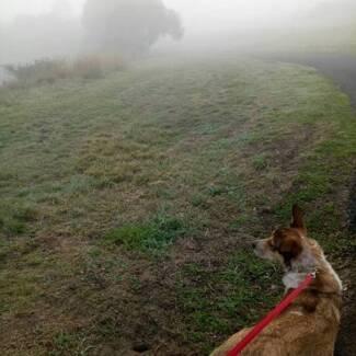 Dog walker other pet services gumtree australia geelong city dog training and behaviour problem solving solutioingenieria Gallery