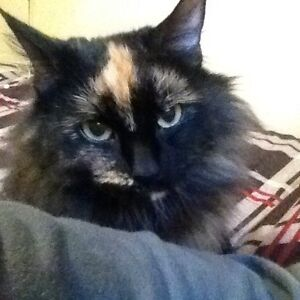 Cat Looking For Suitable Home