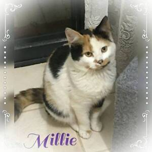 Millie~Rescue Kitten~Vet Work Included