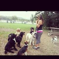 Professional Dog Boarding With Pets-R-Us