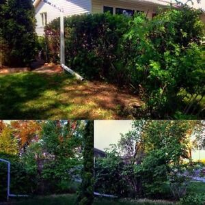 TREE CUTTING AND FALL CLEAN UP SERVICES London Ontario image 5
