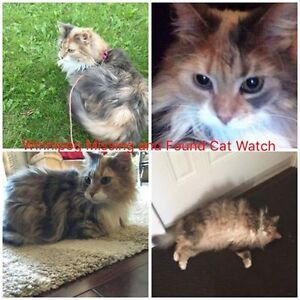 Missing a Cat?  Post/Email Winnipeg Missing and Found Cat Watch!