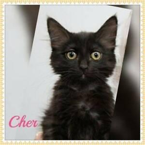 Cher~Rescue Kitten~Vet work included