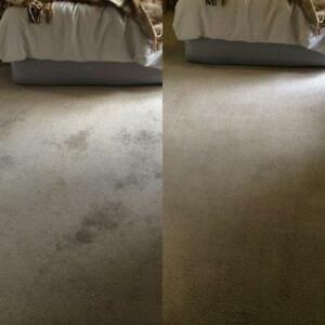 Professional Carpet Cleaning London Ontario image 2