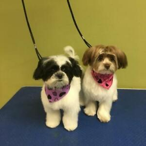 Professional and Certified Dog Grooming