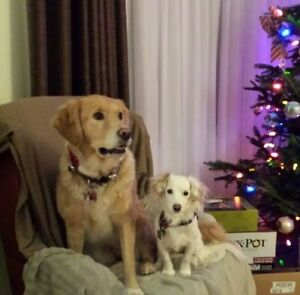 ******PET SITTING (REGISTERED VETERINARY TECHNOLOGIST)****** Kitchener / Waterloo Kitchener Area image 9