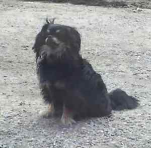 KLAWS:LOST! Coleman Lake/Kennisis Lake Rd West Guilford Kawartha Lakes Peterborough Area image 3