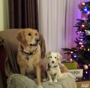 ******PET SITTING (REGISTERED VETERINARY TECHNOLOGIST)****** Kitchener / Waterloo Kitchener Area image 6