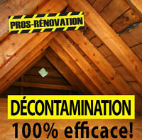 Décontamination - Punaises de lit - Solution 100% efficace!