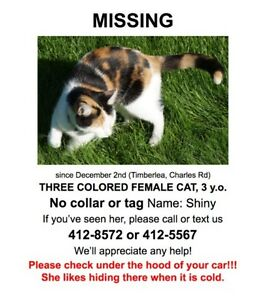 Calico Shiny is still missing