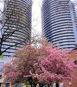 Encore Condos - Carlton St - LUXURY SPLIT 2 BEDROOM CORNER SUITE