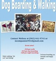 Companion Dog Walking & Boarding