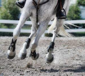 Crumb Rubber Horse Footing for Arenas