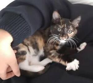 Violet. Cute snuggly kitten