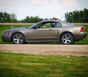 Fall savings. PRICE DROPPED. Ford mustang SVT COBRA