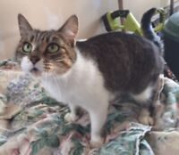KLAWS: Found Aug 26th Lindsay/Russell St W,Lindsay,male,sweet