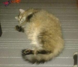 "KLAWS:Lost Stewart St between Charlotte and King St Ptbo ""Lily"""