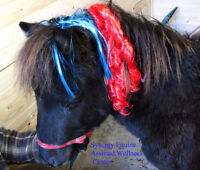 Volunteers to work with MINIATURE HORSES at our Center