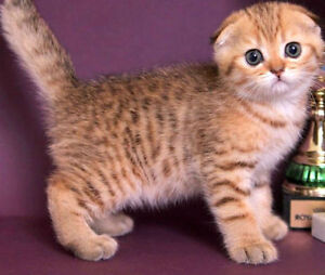 Looking for this lovely kitten
