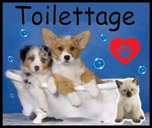 TONTE ♥ CHAT/ CHIEN ♥ STUDIO DE TOILETTAGE PROFESSIONNEL ♥ Groom