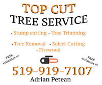 Tree Cutting + Stump Grinding + Yard Cleanup - Top Cut Services