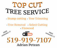 TOP CUT - TREE SERVICES - stump grinding, tree cutting, etc.