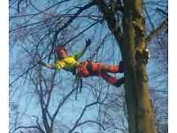 Tree work wanted. All aspects of tree work undertaken.