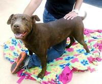 Brownie - Happy and affectionate girl
