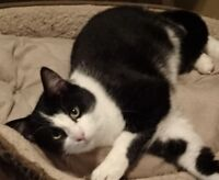 WANTED ***FOSTER HOMES FOR ADULT CATS NEEDED***