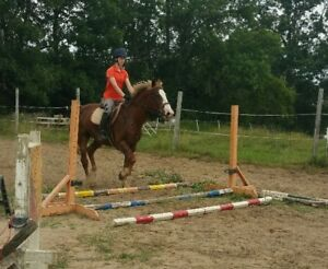 cob type gelding getting back into riding after time off
