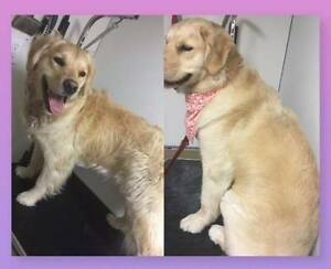 After Glow All Breed Pet Grooming