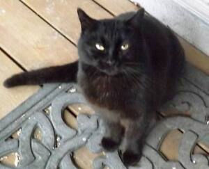 KLAWS: FOUND Black School Rd/Eldon Rd very friendly, intact male