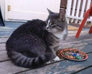 KLAWS: FOUND Colony/Settlement Rd Bobcaygeon, friendly!