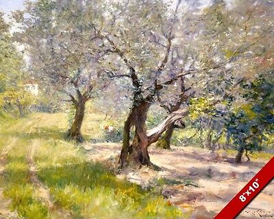 Olive Grove Garden Orchard Trees In The Sunshine Painting Art Real Canvas Print