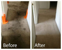 Discount prices on all Carpet Cleaning Services
