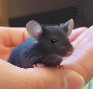 """Baby Male Small & Furry - Mouse: """"Charlie"""""""