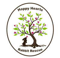 Foster Homes Needed for Rabbits