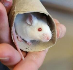 """Baby Male Small & Furry - Mouse: """"Marcko"""""""