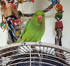 **UPDATED** - Available and What's Coming at Tiny Beaks Aviary