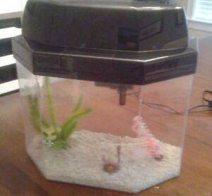 5-GAL FISH TANK with accessories!