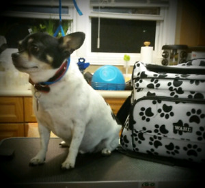 Do it yourself dog wash adopt or rehome pets in ontario kijiji dog grooming solutioingenieria Images