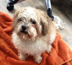 KLAWS: FOUND April 14th in area  Hwy 35/Ravine Rd, Minden
