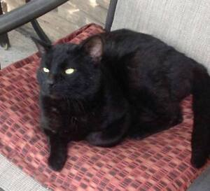 KLAWS: FOUND Ridgewood Rd, by Hwy 7/Double M Camp Ground,Lindsay